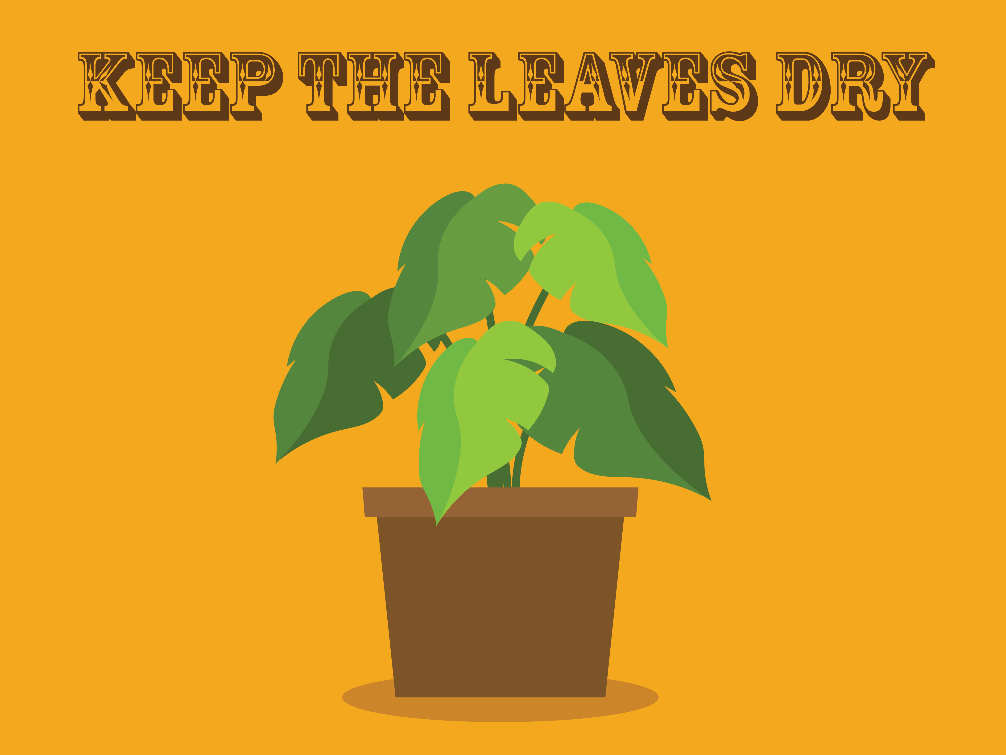 keep the leaves dry