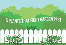 5 Plants That Fight Garden Pest Control