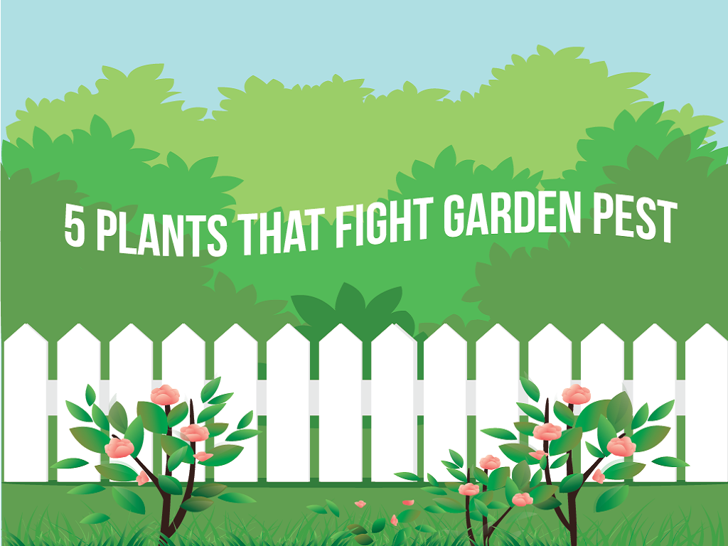 5 Plants That Fight Garden Pest Control Mixarena
